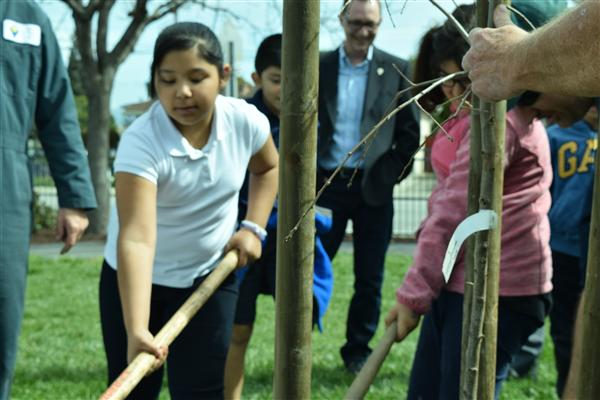 Girl helps plant tree on school campus